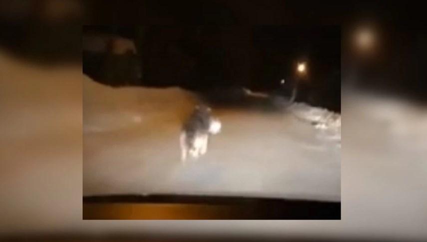 Волки терроризируют село в Коми